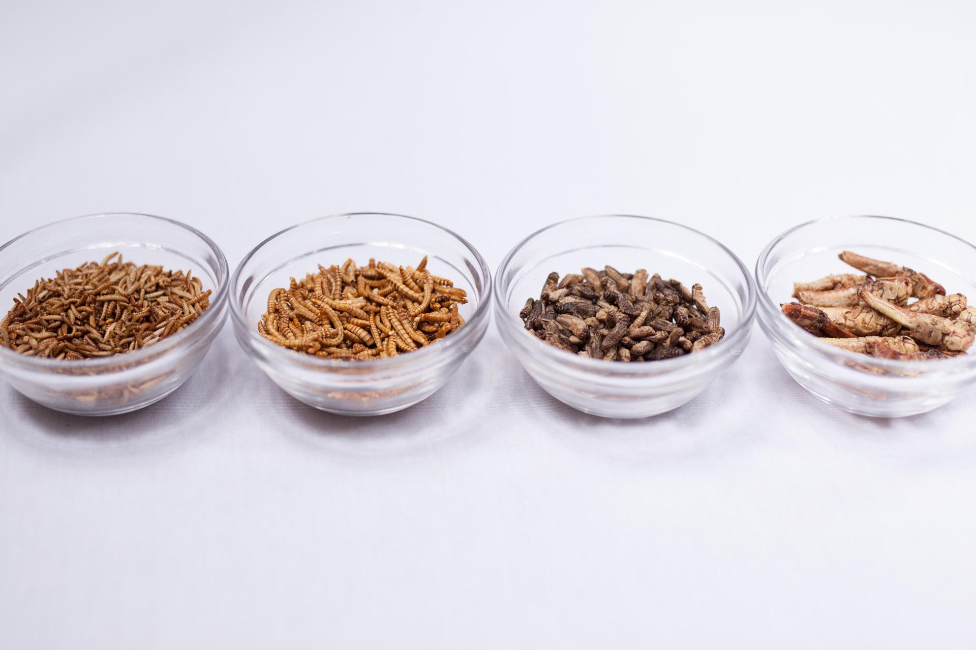 Buffalowürmer, Mehlwürmer, Heimchen (Grillen) und Wanderheuschrecken