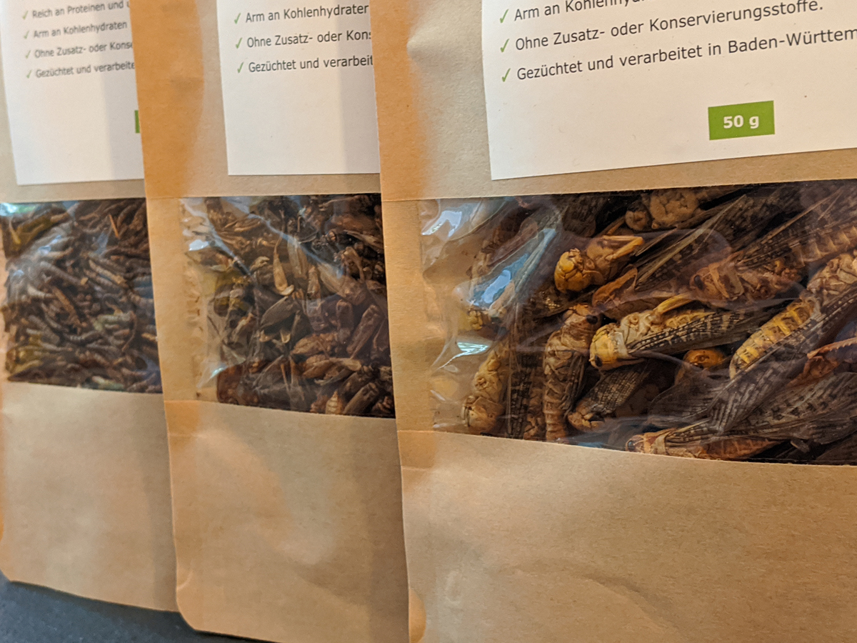 Mehlwürmer, Hausgrillen, Heuschrecken als Lebensmittel