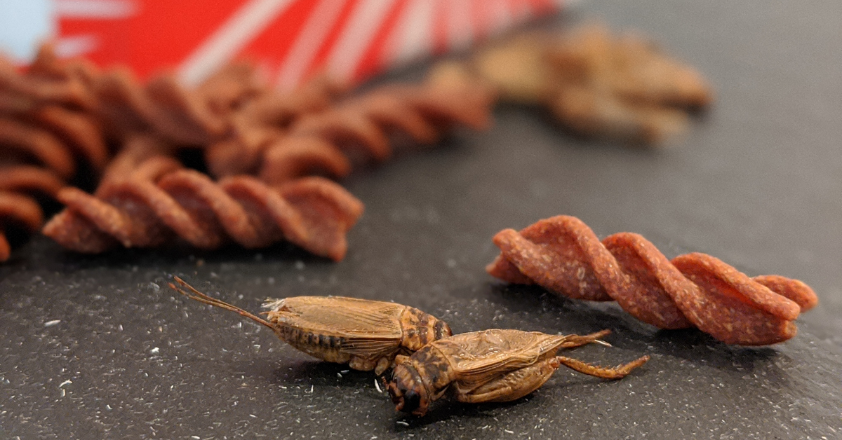 Insekten-Nudeln von Beneto Foods