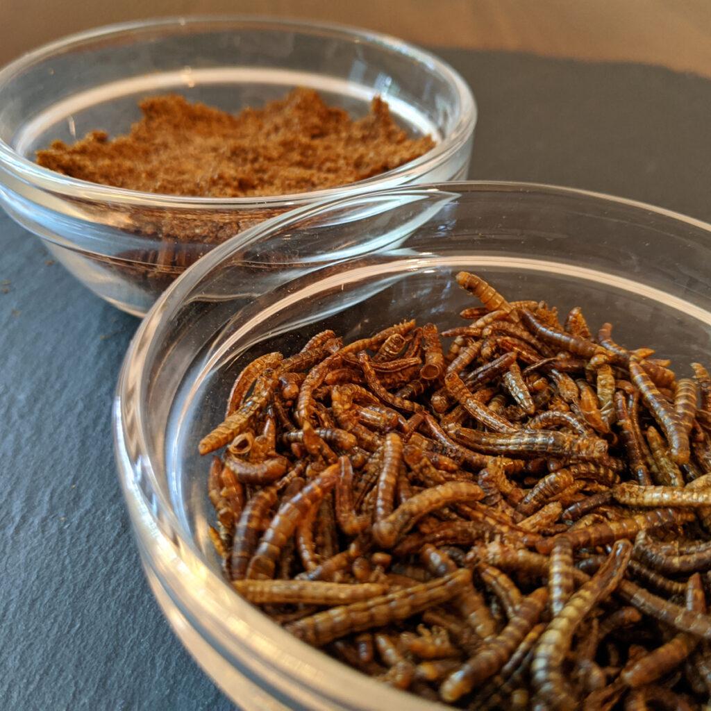 Mehlwürmer zum Essen: Ganz und in Pulverform, zum Beispiel als Koch- oder Backzutat.